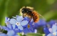 17 petites et grandes villes favorables aux abeilles labellisées ApiCité