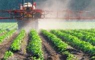 Réduire les pesticides nuit rarement à la productivité