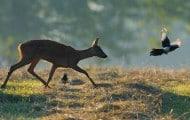 La création d'une agence pour la biodiversité adoptée en Conseil des ministres