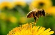 Les pesticides interdits dans les espaces verts dès 2016
