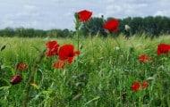 Fin des pesticides dans les jardins dès 2016: trop tôt disent les professionnels