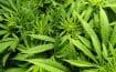 Améliorer la lutte contre l'usage des substances illicites