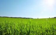 France Nature Environnement propose des idées pour lutter contre le changement climatique à l'échelon local