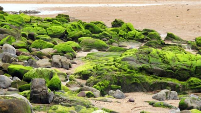 Le plan de lutte contre les algues vertes 2010 2015 l - Cabinet recrutement fonction publique territoriale ...