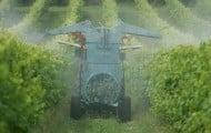 Gironde : bientôt un arrêté préfectoral pour mieux protéger les enfants des pesticides des vignes