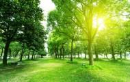 Métropole lilloise recherche espaces verts désespérément