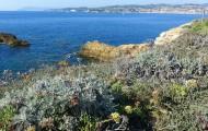 Une proposition de loi pour l'adaptation des territoires littoraux aux changements climatiques assouplit la loi Littoral