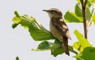 L' Observatoire national de la biodiversité publie un bilan inquiétant