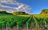 Agriculture bio : l'État s'en remet aux régions pour les aides au maintien