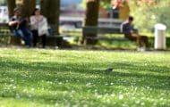 Plusieurs labels facilitent la végétalisation des espaces urbains
