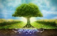 """La biodiversité, une """"priorité"""" au même titre que le climat"""