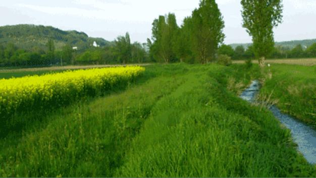 Des zones tampons pour limiter la diffusion dans l'eau des polluants agricoles