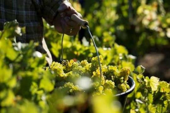 Bourgogne : coup d'envoi pour la Cité des vins et des climats
