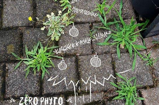 Lyon : une campagne humoristique revalorise la végétation spontanée en ville