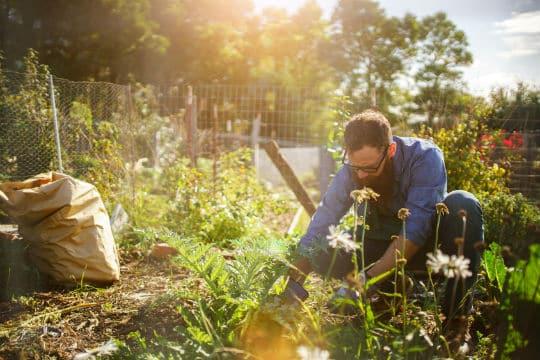 Albi développe l'agriculture et l'alimentation de proximité en ville