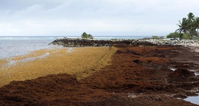 Nicolas Hulot promet un ramassage de sargasses en moins de 48h sur les côtes de Guadeloupe