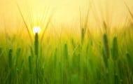 Une campagne nationale mesure les résidus de pesticides dans l'air