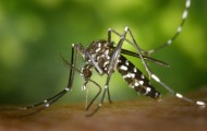 Maine-et-Loire : un maire interdit l'entrée de sa commune... aux moustiques