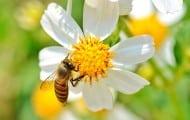 Plan biodiversité : moins de béton, plus de végétation
