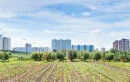 Exposition à Paris : la ville aussi peut devenir agricole