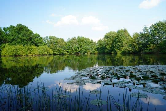 La préservation des zones humides mondiales mise en lumière pendant un mois