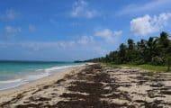 """Un sommet """"international"""" sur la lutte contre les sargasses d'ici la fin de l'année en Guadeloupe"""