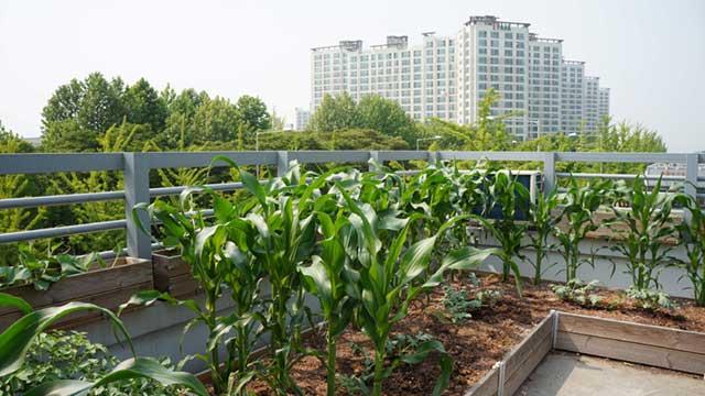 """Le CESE encourage l'agriculture urbaine, à condition qu'elle soit """"durable"""""""