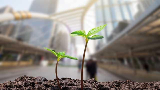 Agriculture urbaine : Paris dévoile 21 nouveaux projets
