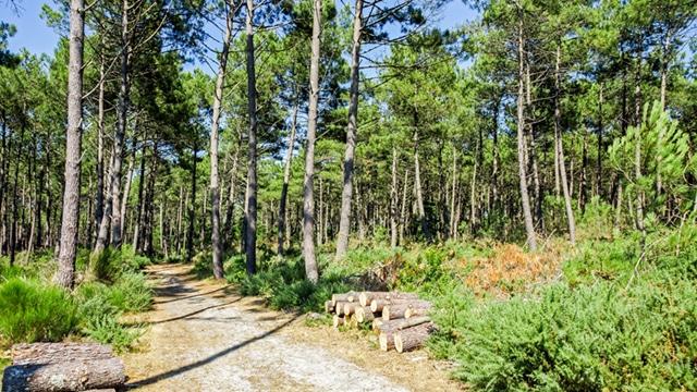Sécuriser les forêts en cas de sécheresse exceptionnelle