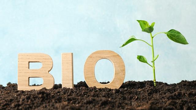 Bio en restauration collective : des stratégies pour réduire les coûts