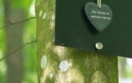Un projet pilote de forêt cinéraire en suspens en Haute-Garonne