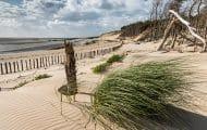 Près de Berck-sur-Mer, des filets expérimentaux limitent l'érosion des dunes