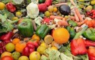 Terra Nova voudrait que la restauration scolaire accélère la transition alimentaire
