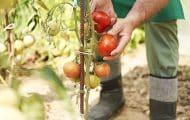 Nos territoires en action pour une alimentation durable et saine