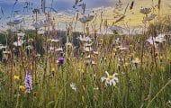 Aider les communes à protéger la faune, la flore et les espaces naturels