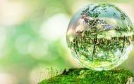"""Bilan """"décevant"""" pour la loi biodiversité"""