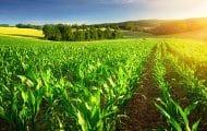 L'Anses restreint les usages agricoles du glyphosate