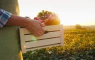 """Les collectivités prônent la """"relocalisation"""" de l'alimentation"""