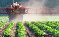 Les Outremers utilisent davantage de pesticides, à cause du climat et des insectes